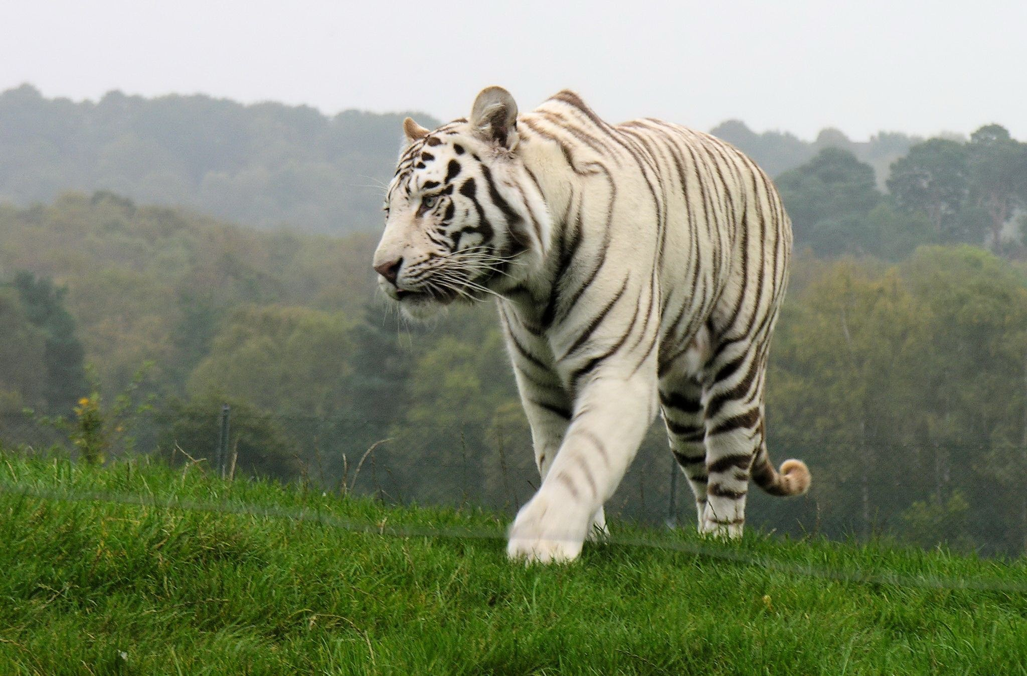 зоопарки сохраняют животных от вымирания