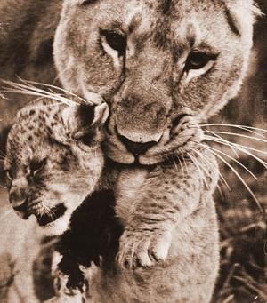 Тайна чёрных львов