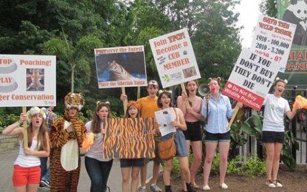 Спасаем тигров! (видео)