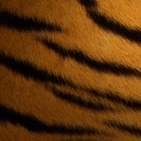 Теория формирования полос тигра и пятен леопарда подтверждена