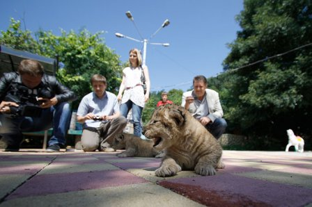 В зоопарке Ставрополя родились львята