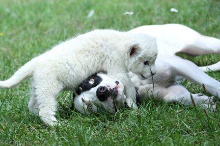 Львёнок Жожо и пёс Леон!