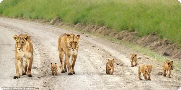 Прогулка в заповеднике масаи мара