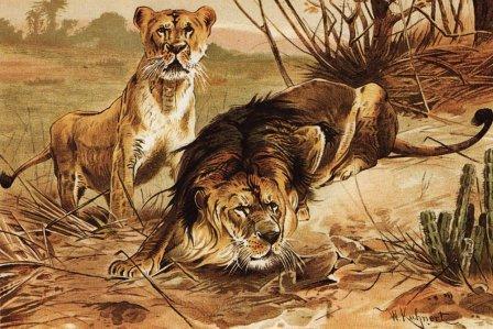 Семейство Кошки (Felidae) по Альфреду Брему