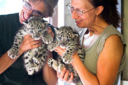 В зоопарке Rosamond Gifford Zoo родились снежные барсы