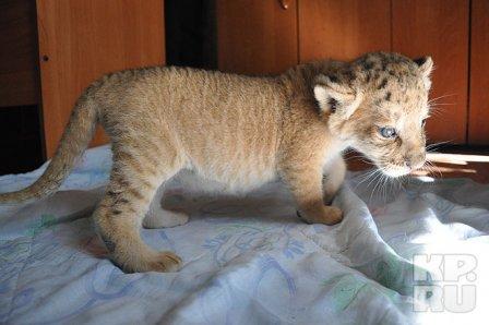 Новосибирский зоопарк показал своего лилигренка