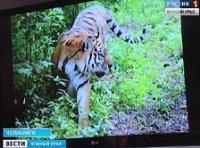 Зоозащитники предложили праздновать Всемирный день тигра на Южном Урале