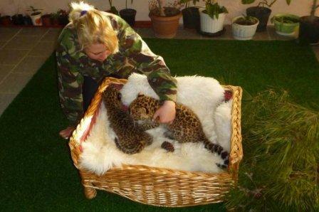 В Геленджике показали детенышей леопарда