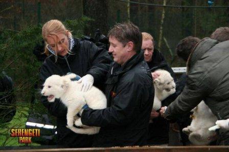 Немецкий зоопарк представил белых тигрят и львят