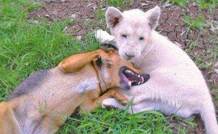 Собака и львенок лучшие друзья
