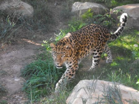 Sunset Zoo (Манхэттен, Канзас) встречает новых жильцов