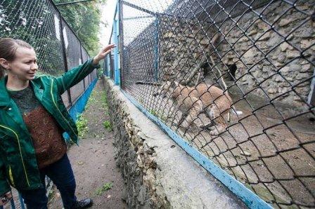 В Казанском зоопарке показали рысят