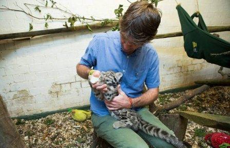 Работник зоопарка выходил детеныша леопарда