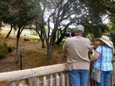 Всемирный день львов в зоопарке Окленда