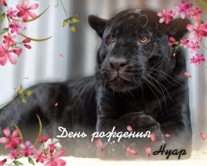 Самарцев приглашают на день рождения черного ягуара Нуар