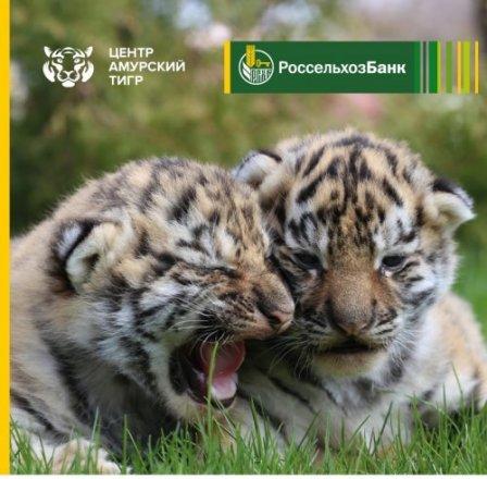 Россельхозбанк выпустил кредитную карту в поддержку амурских тигров