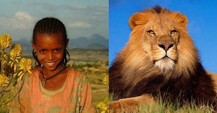 Львы спасли девочку от изнасилования