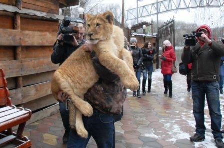 «Победа» из Волгограда. В Пятигорске поселилась маленькая львица