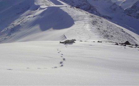 Недалеко от Алма-Аты туристу удалось поймать в объектив снежного барса