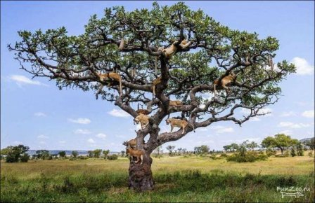 Дерево со львами