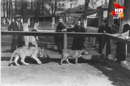 Как в Пермском зоопарке дружили лев Таймыр и собака Джек