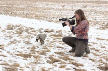 В Даурском заповеднике выпустили на волю котов-манулов, которых приютили на время зимы