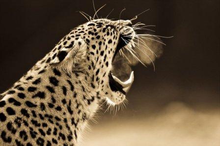 Нежность и беспокойство больших кошек