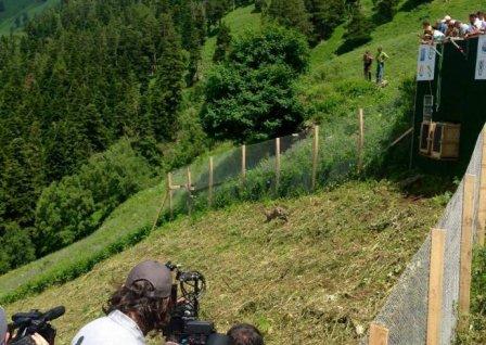 Выпущенные в Кавказский заповедник леопарды начали осваивать территорию